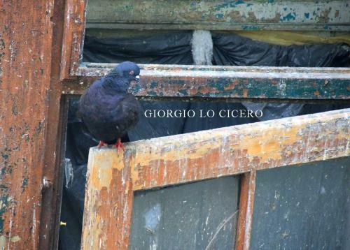 2017 08 06 0098- Giorgio Lo Cicero