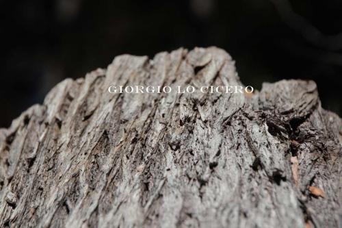 IMG 3910 - Giorgio Lo Cicero