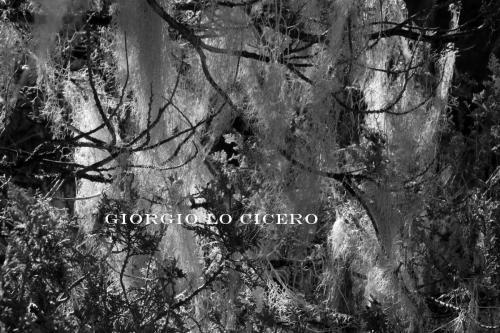 IMG 3953 - Giorgio Lo Cicero