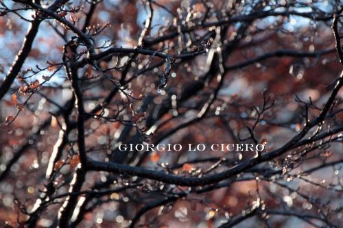 IMG 4108 - Giorgio Lo Cicero