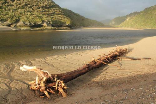 IMG 4575- Giorgio Lo Cicero