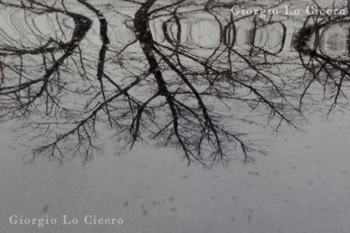 2020 01 24 3689- Giorgio Lo Cicero