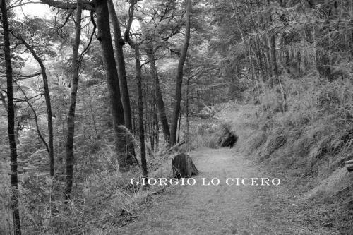 IMG 3683 - Giorgio Lo Cicero