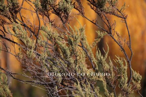 IMG 4009 - Giorgio Lo Cicero