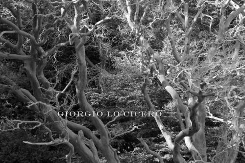 IMG 4041 - Giorgio Lo Cicero