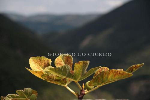 IMG 5344 - Giorgio Lo Cicero