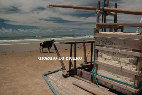 IMG 5728 - Giorgio Lo Cicero