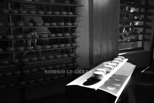 IMG 8047 - Giorgio Lo Cicero
